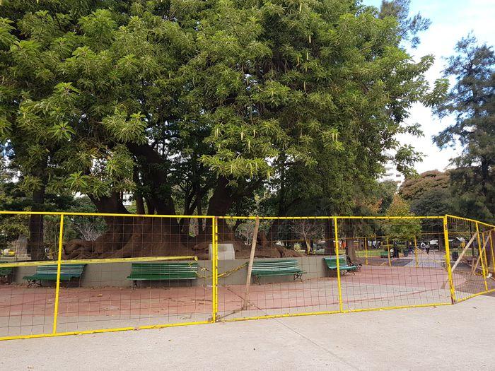El Ombú Histórico del Parque Rivadavia fue vallado por seguridad y para realizar estudios sobre su estado.
