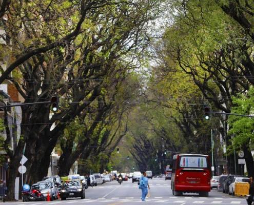 La Av, Pedro Goyena con su túnel de árboles de más de 20 metros de altura.